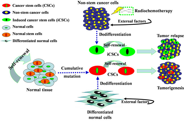 Origins of CSCs and iCSCs.