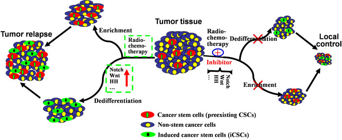 Mechanisms underlying the generation of iCSCs by radiochemotherapy and their implications for new therapeutic strategies.