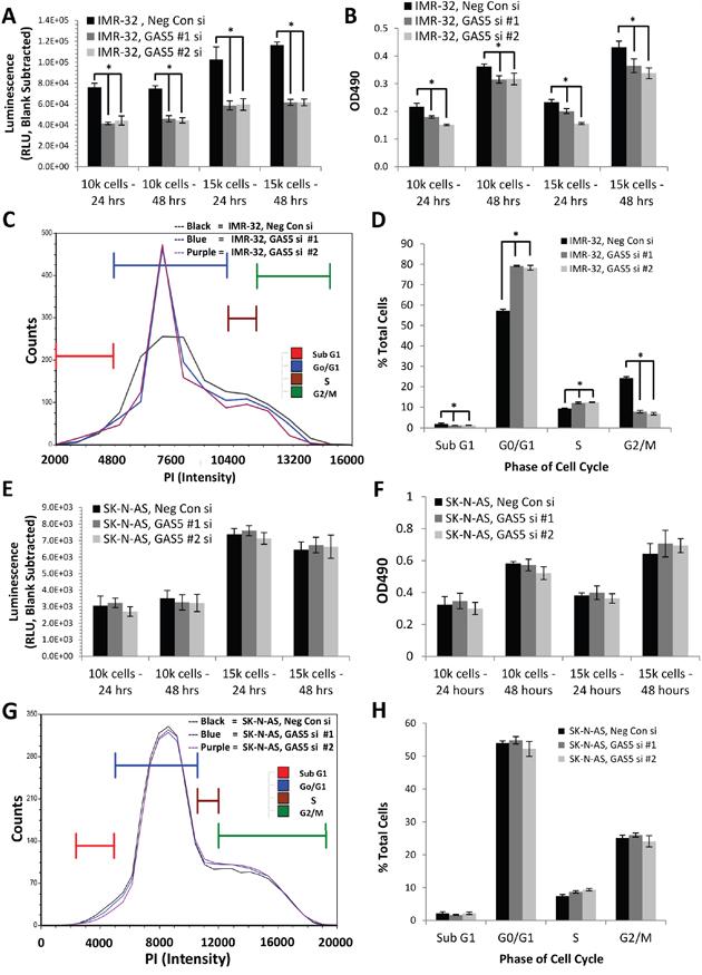 Effect of GAS5 knockdown on human neuroblastoma cells.