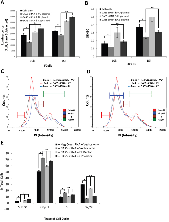 Differential modulations of cellular functions by GAS5 splice variants, FL and C2, in IMR-32 cells.