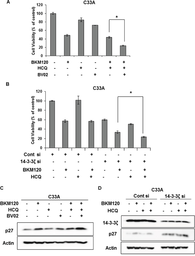 Dissociation of FOXO3a and 14-3-3 sensitizes C33A cells to combination treatment with BKM120 and HCQ.