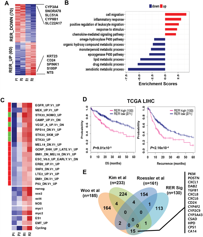 Differential expression between primary and recurrent HCC.