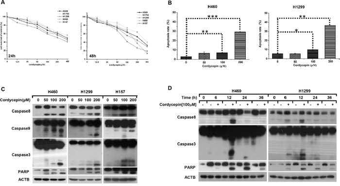 Cordycepin triggers caspase-dependent apoptosis in NSCLC.