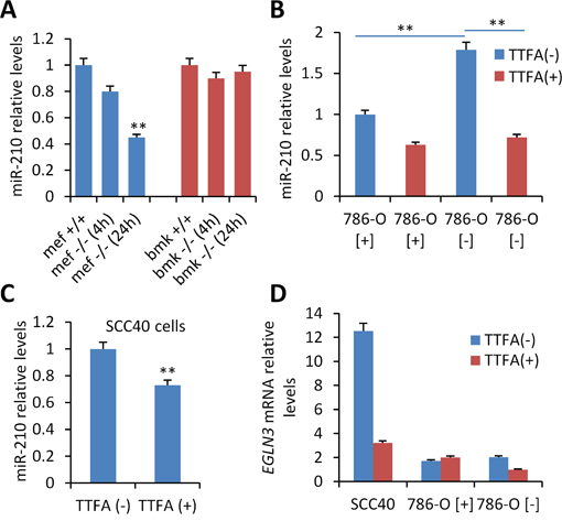 Analysis of the role of SDHD on miR-210 expression.