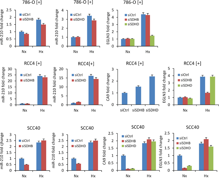 Absence of miR-210 up-regulation by siRNA-mediated silencing of SDHB or SDHD.