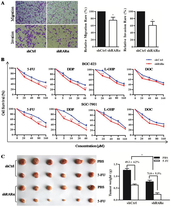 Critical role of RARα in cellular motility, invasion and drug susceptibility.