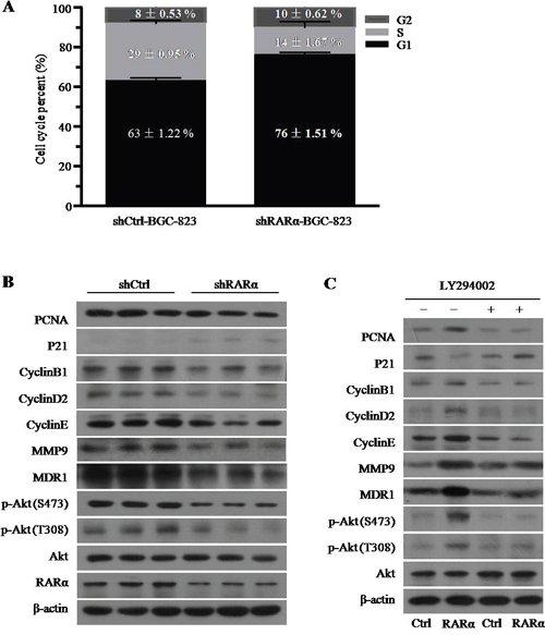 The role and mechanism of RARα in the GC cell development and progression.