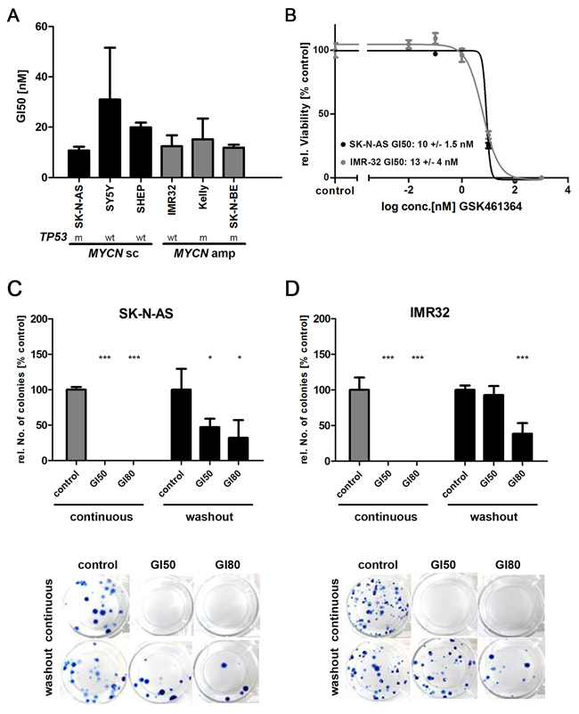 GSK461364-mediated PLK1 inhibition reduces cell viability and clonogenicity in neuroblastoma cell lines.