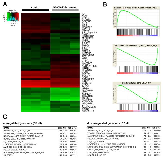 Cell cycle regulators are differentially expressed following GSK461364-mediated PLK1 inhibition.