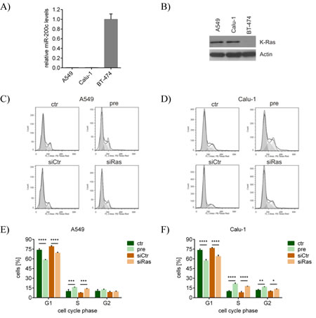 miR-200c and siRas also affect the cell cycle of lung cancer cells by inhibiting