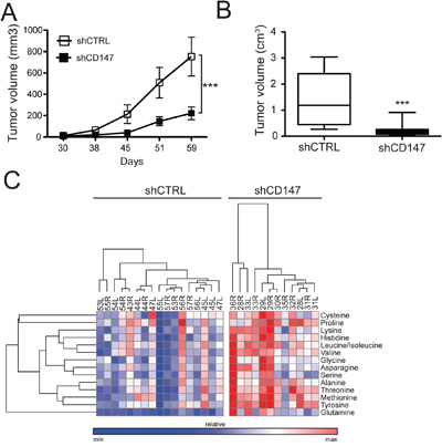 CD147 drives tumor growth in a xenograft mouse model and supports CD147-mediated metabolic reprogramming.