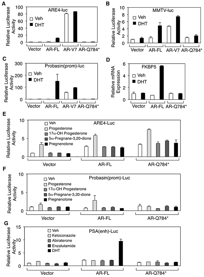 AR-Q784* mutant is deficient for androgen stimulated transcription activity.