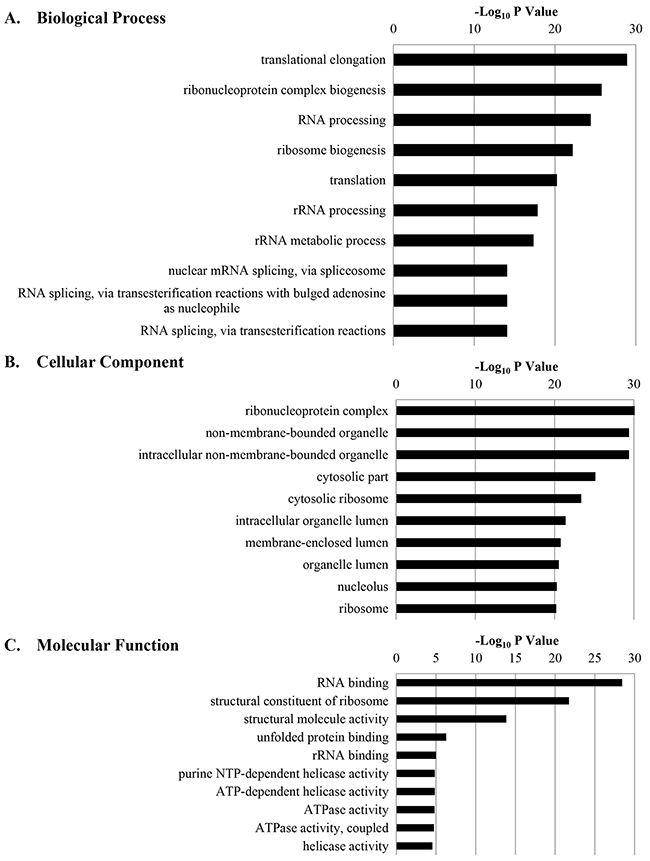 The 10 most significantly regulated gene ontology (GO) categories for calgranulin B-interacting proteins according to DAVID GO enrichment analysis.