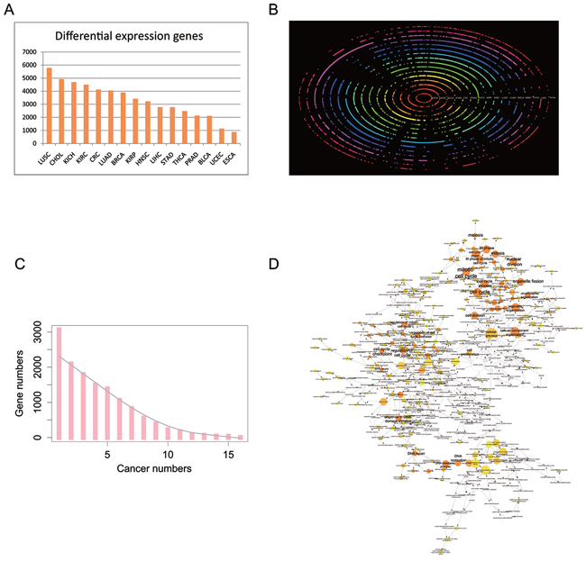 Differential expression protein coding genes across 16 tissue types.