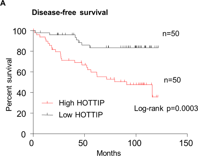 Kaplan–Meier survival curves were stratified by HOTTIP expression level in breast cancer patients.