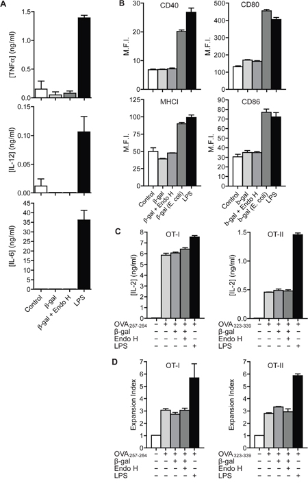 Recognition of N-glycosylated proteins does not influence DC maturation.