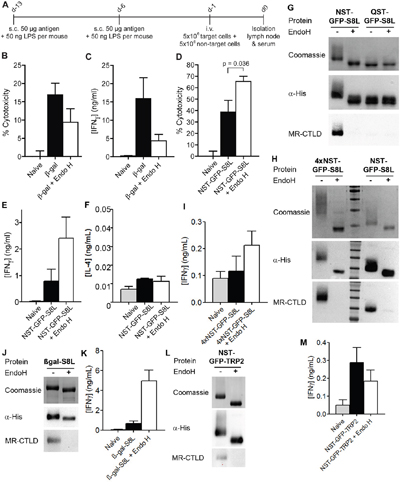 Effect of N-glycosylation on antigen presentation critically depends on the nature of the antigen.