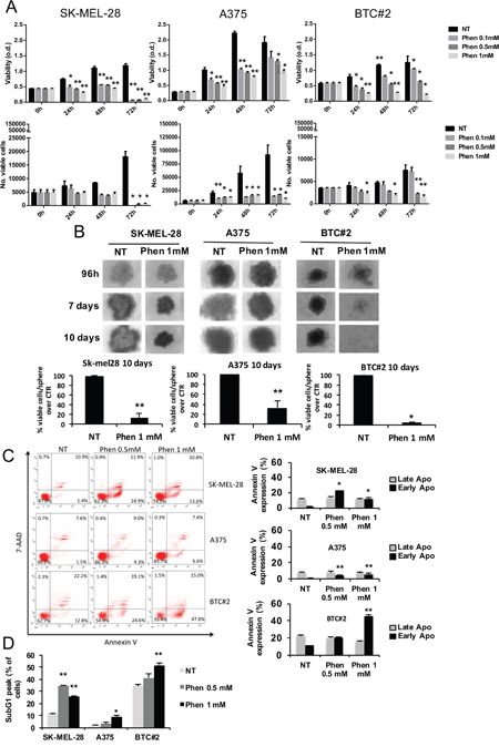 Phenformin reduces melanoma cell viability in both 2D and 3D models.