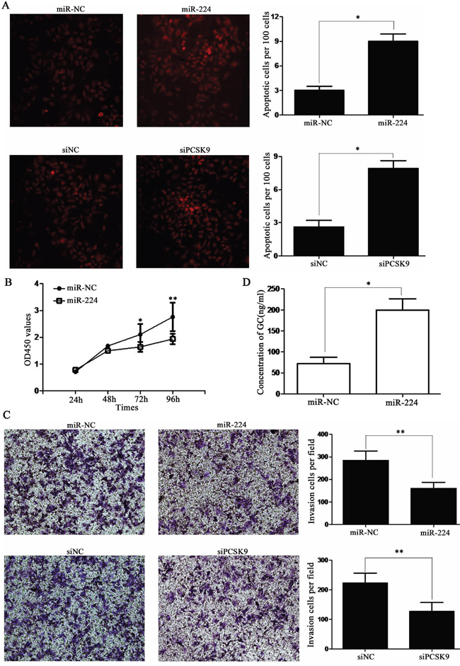 miR-224 agomir or siPCSK9 promotes apoptosis and suppresses proliferation, invasion of BON-1 cells.