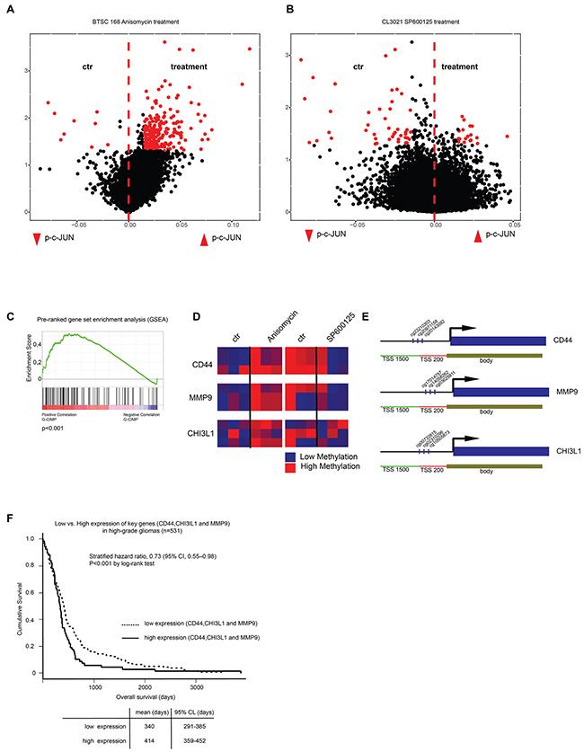 C-Jun phosphorylation induces genome wide methylation.