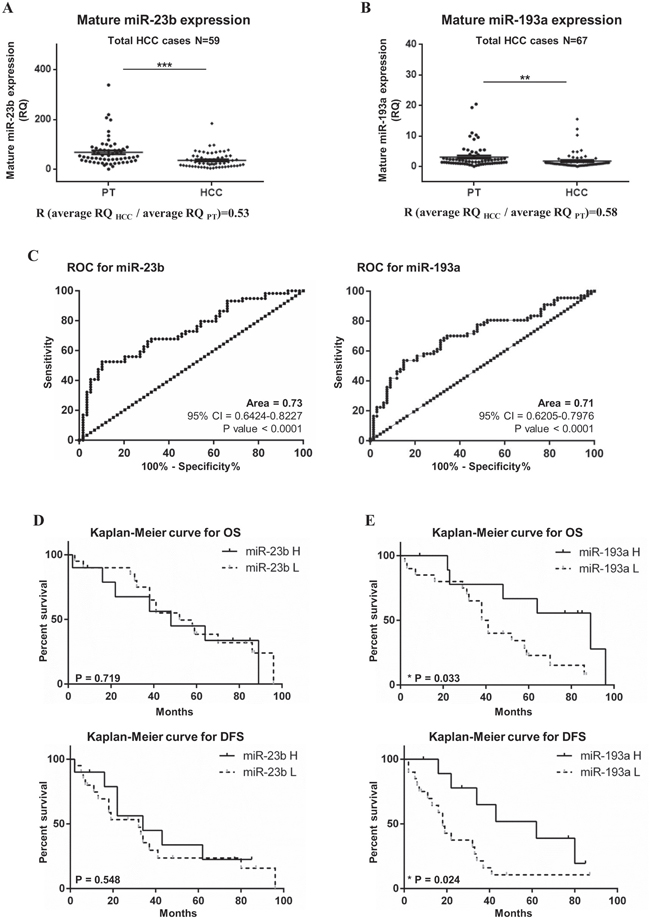 Expression of mature miR-23b and miR-193a in HCC and peritumoral specimens.