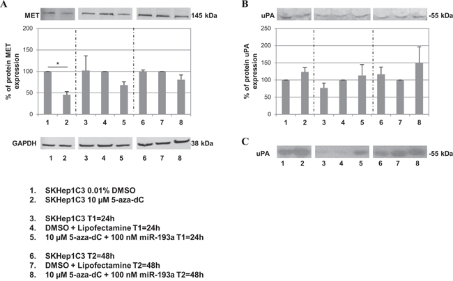 Effects of combined treatment with 5-aza-dC and miR-193a on MET and uPA protein expression levels.