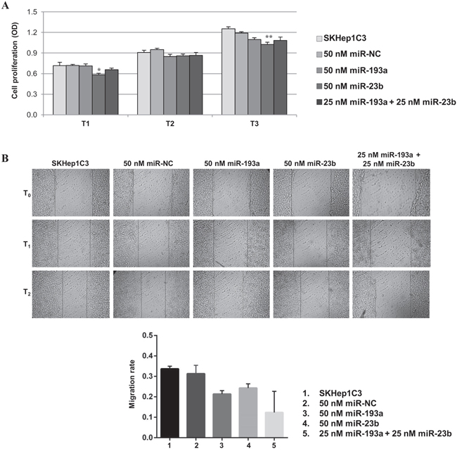 Effects of miR-23b and miR-193a ectopic expression on the proliferation and migration of SKHep1C3 cells.