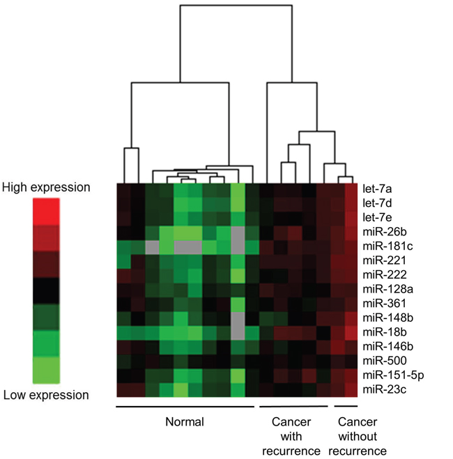 Differences in miRNA expression in the frozen tissues between cancer tissues with recurrence and those without recurrence using a heat map for the preliminary study.