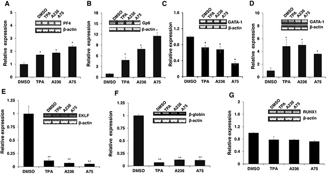 Fli-1 transactivating compounds alter expression of marker genes involved in erythroid to megakaryocytic differentiation.