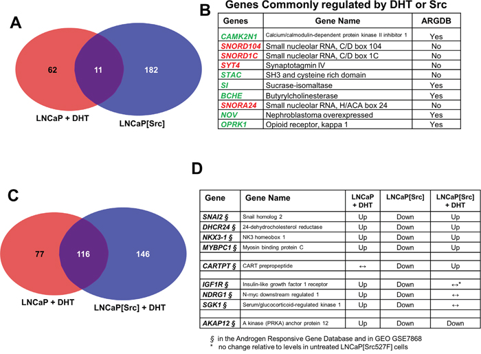 Genes regulated by Src in the presence or absence of DHT.