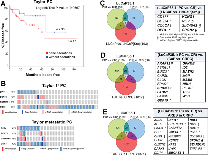 Src-regulated CRPC gene expression patterns correlate with earlier disease progression.