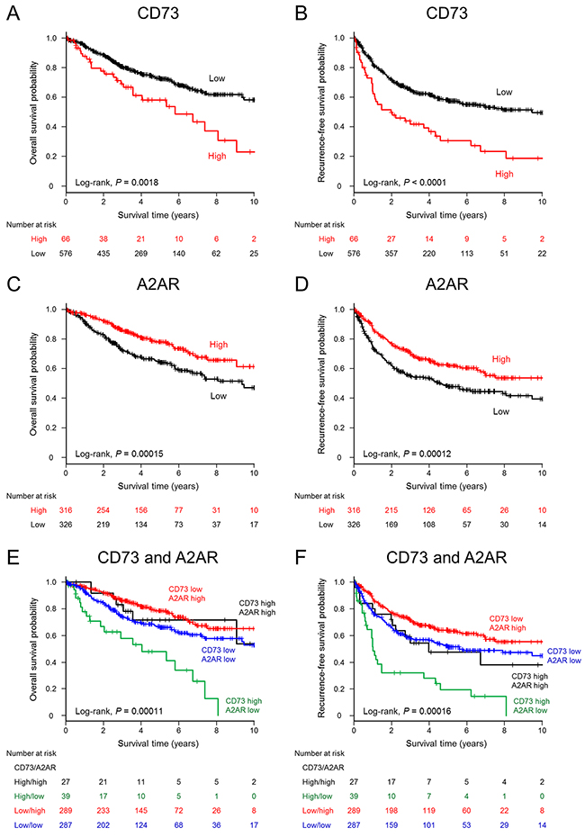 Kaplan–Meier estimates of overall survival and recurrence-free survival (years) stratified according to CD73 or A2AR expression levels in patients with non-small cell lung cancer.