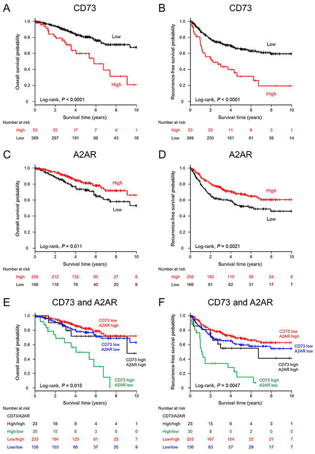 Kaplan–Meier estimates of overall survival and recurrence-free survival (years) stratified according to CD73 or A2AR expression levels in patients with lung adenocarcinoma.