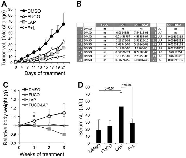 Fucoidan enhances the anti-melanoma effects of lapatinib.