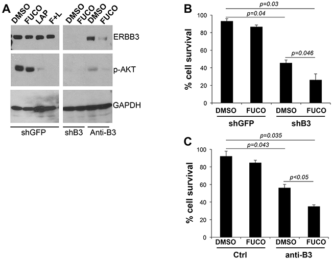 Fucoidan cooperates with specific inhibition of ERBB3.