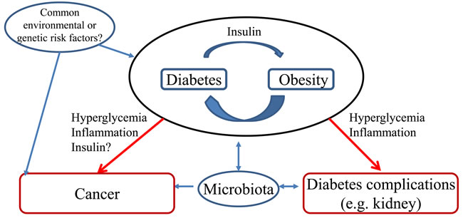 Hypotheses potentially explaining the association between diabetes and colorectal cancer.