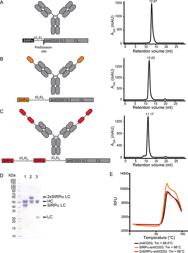Generation and characterization of licMAB molecules.