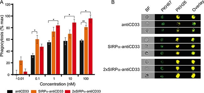 LicMAB molecules enhanced phagocytosis of MOLM-13 cells.