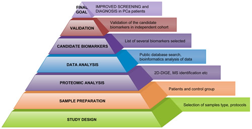 Workflow in Workflow in PCa proteomics.