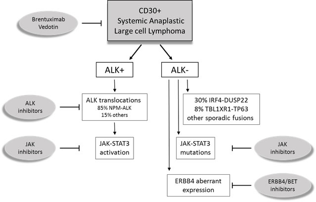 Schematic representation of systemic Anaplastic Large Cell Lymphomas (ALCL).