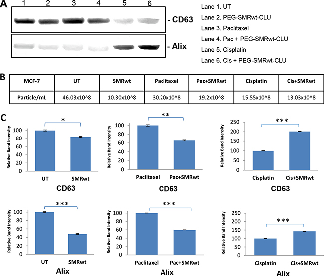 Exosome-specific proteins can be detected on exosomes from MCF-7 breast cancer cells.