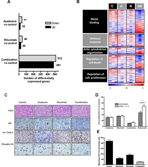 Gene expression profile analysis of mice-treated tumors.