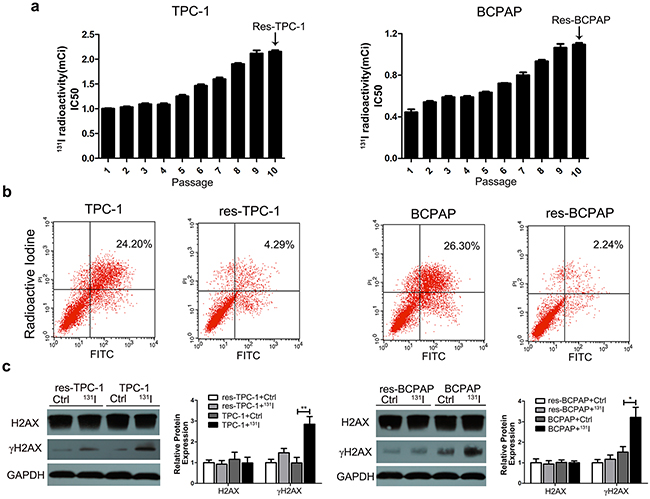 The long-term sub-lethal dose of 131I exposure induces the tolerance of thyroid cancer cells.