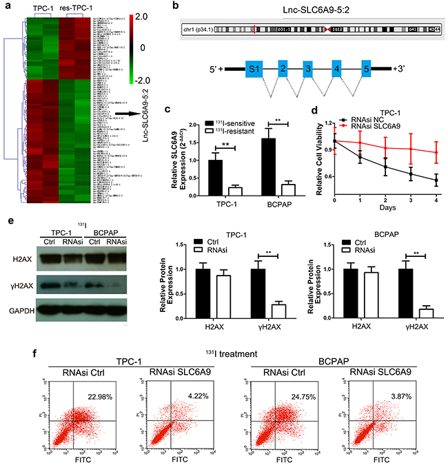 SLC6A9 was downregulated in resistant thyroid cancer cells and was correlated with 131I tolerance.