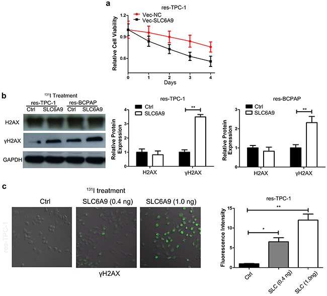 SLC6A9 overexpression leads to thyroid cancer cell sensitivity to 131I treatment.