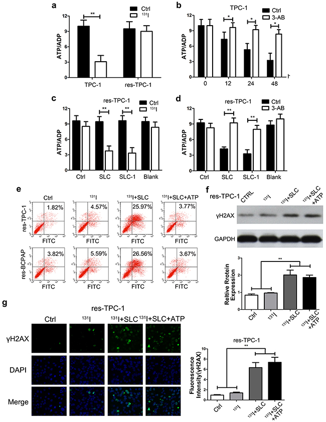 Upregulation of the SLC6A9-PARP-1 pathway enhanced the sensitivity to 131I treatment through energy exhaustion during excess DNA repair.