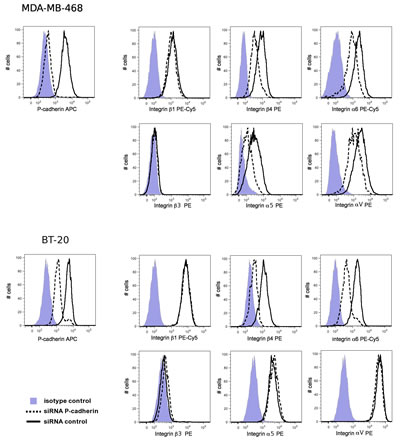 P-cadherin knock-down reduces integrin α6 and β4 expression in MDA-MB-468 and in BT-20 cells.