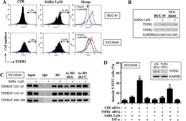 Effects of SAHA on TNFR1 expression in HCC-95 and NCI-H460 cells.