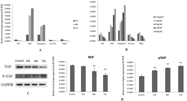 Downregulation of YAP by SJAMP contributes to inhibition pancreatic cancer cells growth.