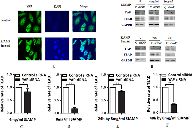 SJAMP improved the phosphorylation of YAP to inhibit the proliferation of pancreatic cancer cells.